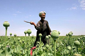 >As Imperialist Forces Continue, Opium Production in Afghanistan Increases