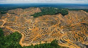 malaysiadeforestation