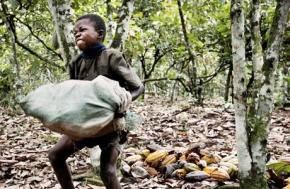 Cocoa-Child-Laborer